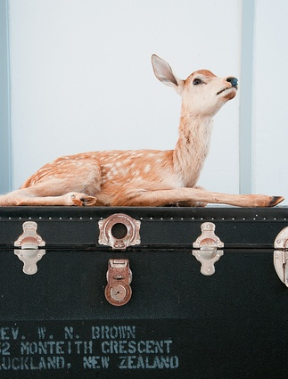 The chest is a 'found' object that was dumped on our street footpath. Addressed to Rev. W. N. Brown − I'm sure he'd be glad it's gone to a good home and it's a nice resting place for the deer.