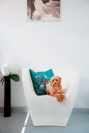The Albert Chair by Ron Arad was a 21st-birthday present and migrates indoors and out as the seasons change. I love its timelessness and unsuspecting comfort. Ruby, our poodle papillon, sure agrees.
