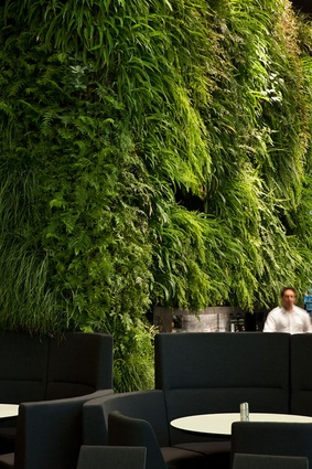 Green wall at Hotel Novotel Auckland Airport.