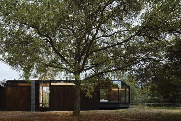 A Pavilion Between Trees by Branch Studio Architects